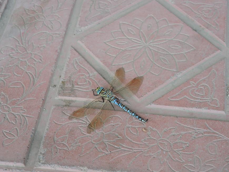 у нас мухи и комары, а у них стрекозы
