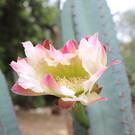 Ботанический сад Кальяри