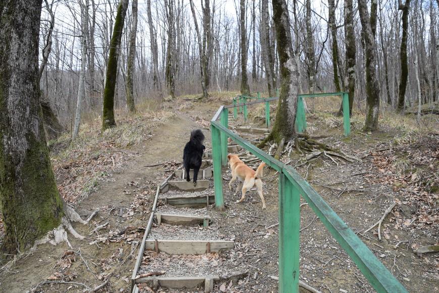 собаки шли впереди нас, а мы просто следовали за ними