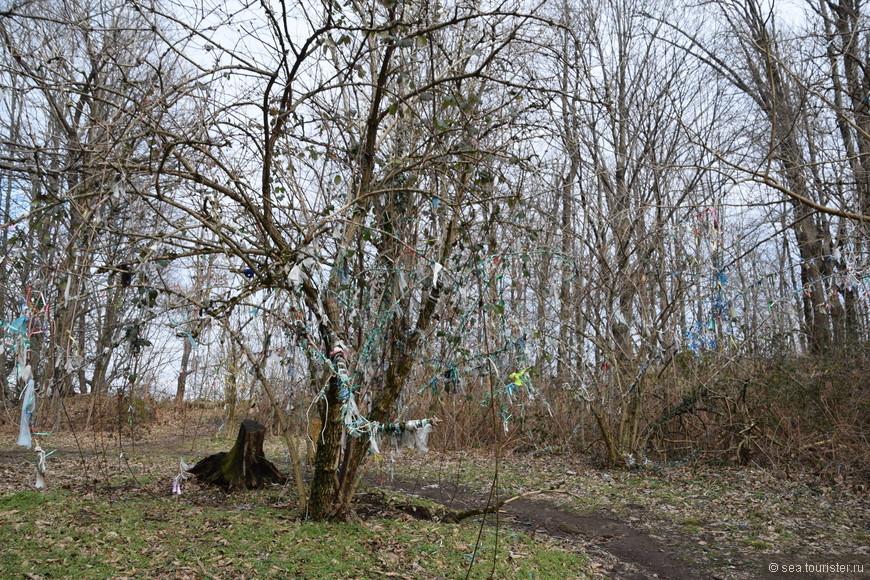 одна из древних традиций - подвязывание лоскута ткани на дерево, чтобы выразить свое признание богам данного места или загадать желание. Увы, деревья это совсем не украшает