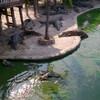 Крокодиловое шоу
