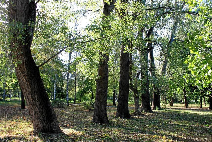Ряд деревьев-богатырей в Чапаевском парке.