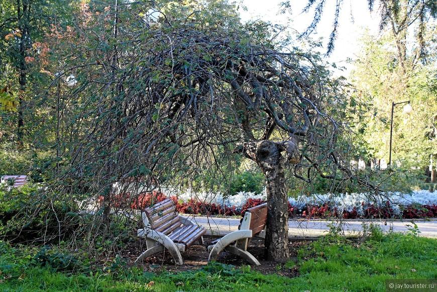 Дерево-беседка в Чапаевском парке.