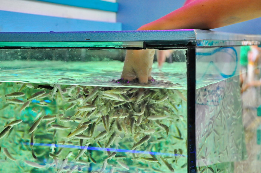 16. Классические «пляжные» рыбки. Работник заверил меня, что каждый аквариум стоит 10 000 долларов, а рыбки работают не более часа в день… Сказочные истории.