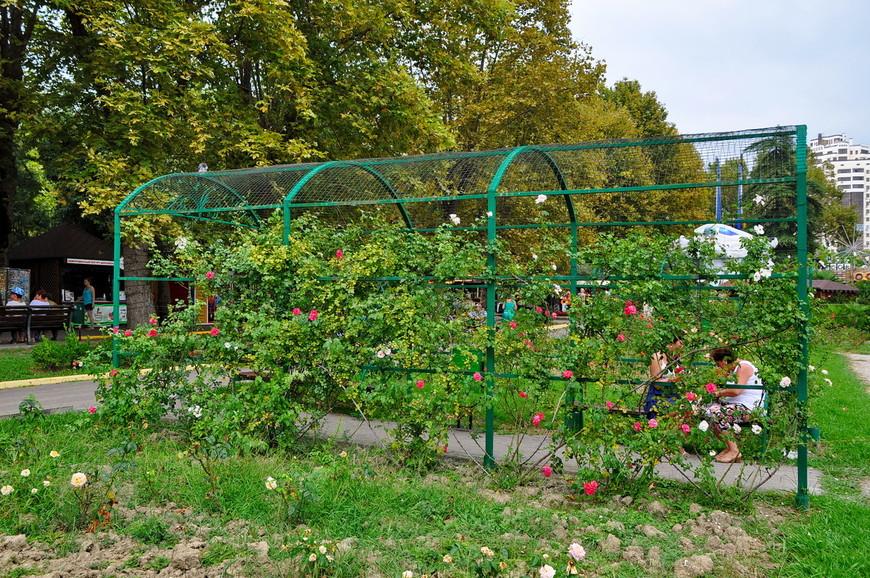 26. Судя по конструкциям растения должны были расти везде, но не сложилось.