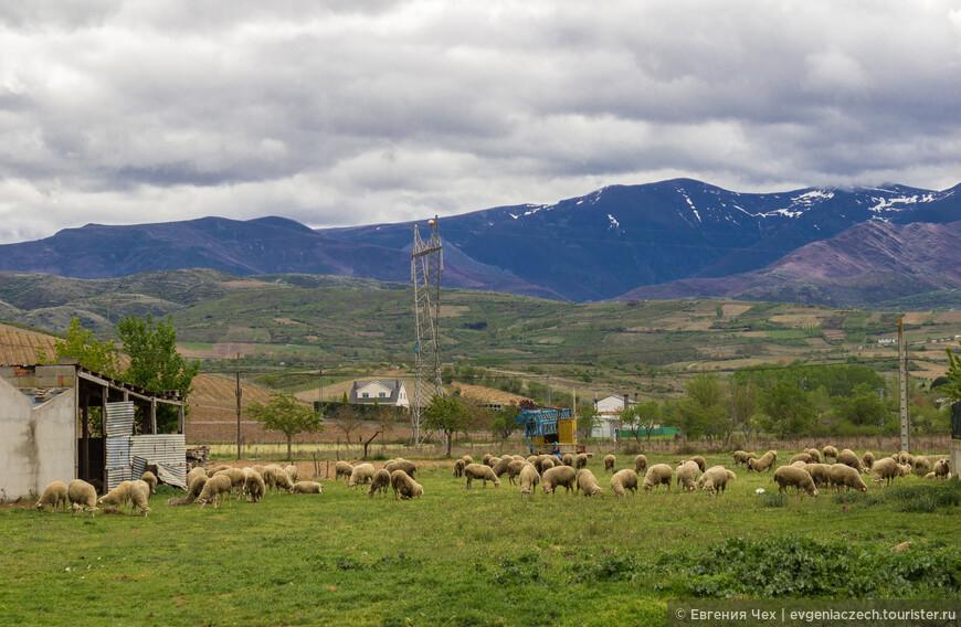 Овечки, овечки..