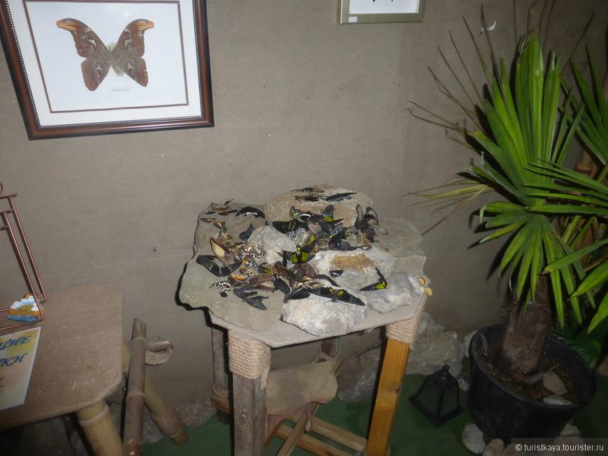 Маленький, но с большими ценами на вход, музей бабочек на набережной.
