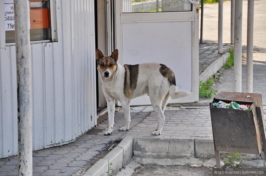 25. Шадринская собака элегантна во всем.