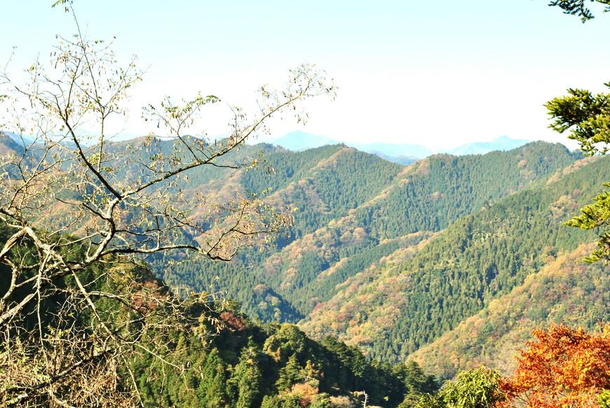 Момидзи на горе Такао