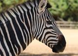 Сафари и зоопарк в Тель-Авиве