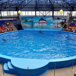 Сочи Парк — Дельфинарий
