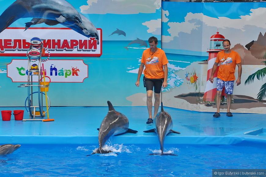 05. Артистов не много (в сравнении с большим сочинским дельфинарием) – 4 дельфина-афалина и морской котик.