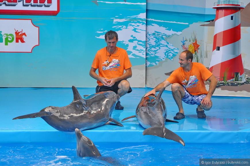 06. Немного напрягает постоянное «выпрашивание» денег со стороны работников. Вот, например, на фотографии предлагается сняться с дельфинами еще до выступления.
