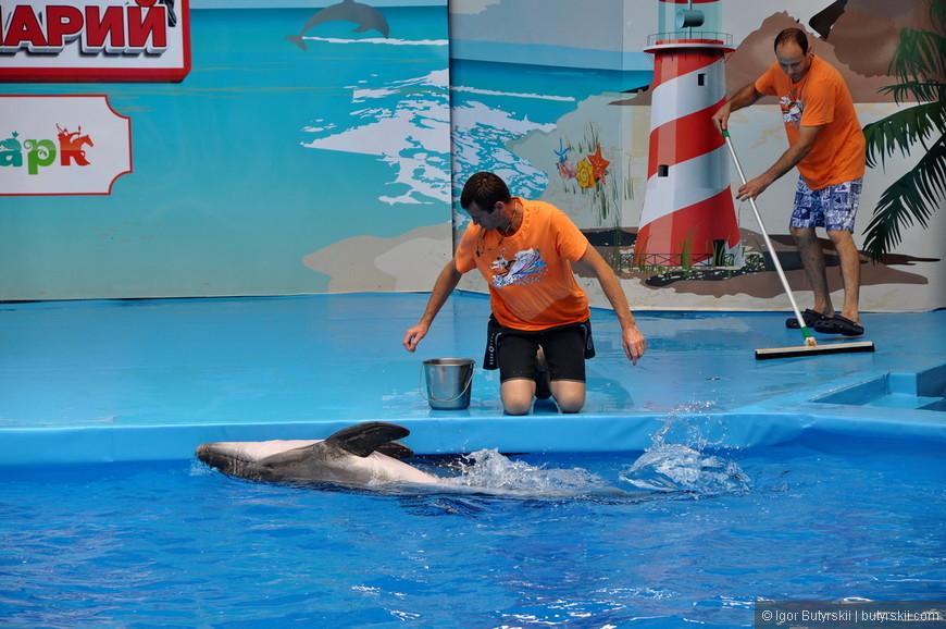 08. Дельфины перекочевали из сочинского дельфинария, можно сказать, опытные артисты.