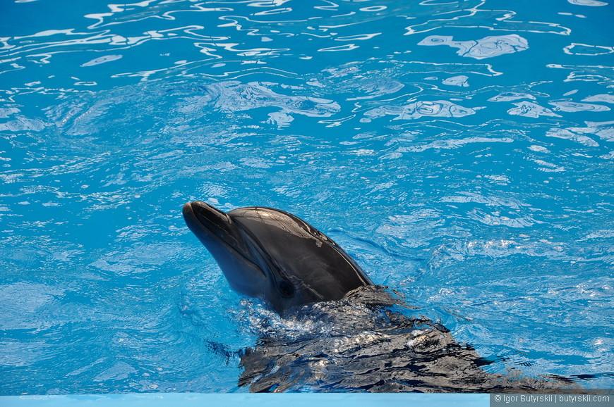 10. Дельфины отработали первую съемку.