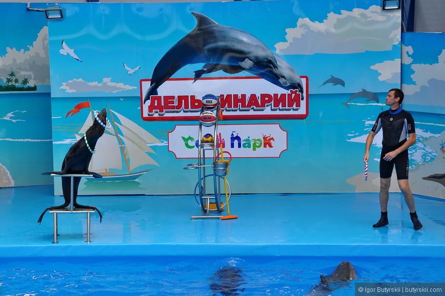 17. В это время дельфины плавают в бассейне. Надо сказать, что они довольно молодые и ведут себя забавно.