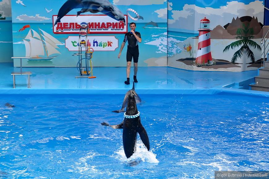 18. Во время выступления котика дельфинам становится скучно, некоторые прыгают в высоту, некоторые выпрыгивают посмотреть на сцену.