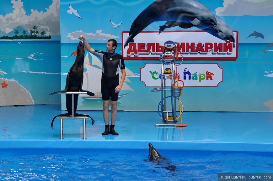 20. Дельфин наблюдает за выступлением котика, очень забавно выглядит.