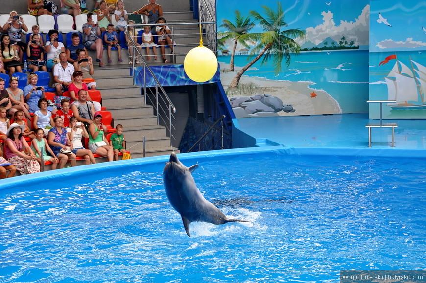 21. Скучающие дельфины развлекают себя сами – прыжками например.