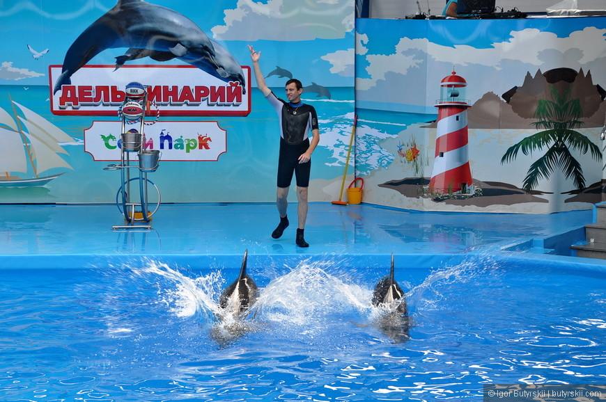 26. Начинают выступать дельфины. Их хоть и четверо, но по факту выступают только двое. Еще два дельфина только учатся – просто плавают рядом.