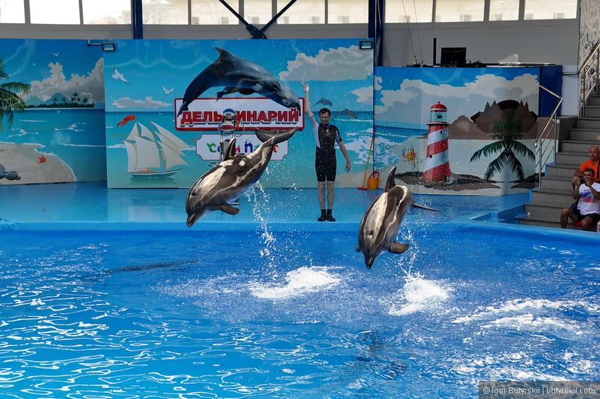 28. Дельфины выступают намного энергичнее, но проще, нежели морской котик.