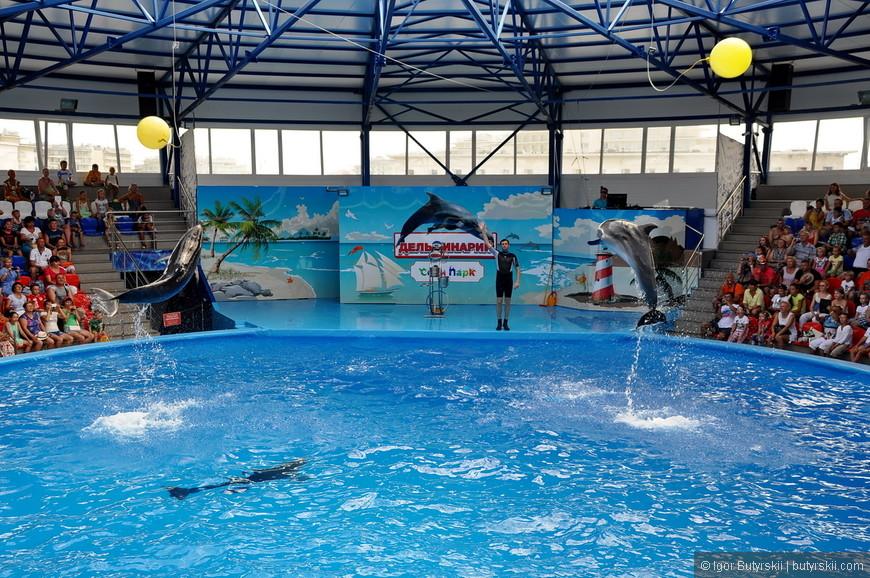 30. Дельфины выбивают мячи выпрыгивая на несколько метров.