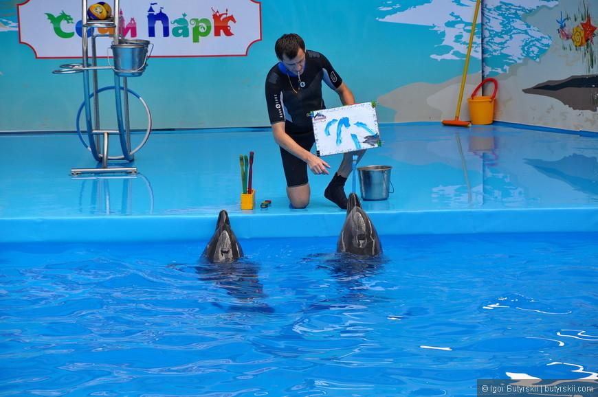 33. Ближе к концу выступления начинается очередной этап «заработка» - дельфины «рисуют» картину. На самом деле животное просто держит кисть, а дрессировщик водит по ней бумагу.