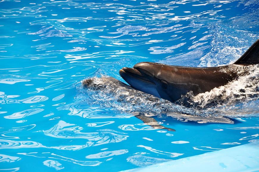 38. Дельфинам нравится, я надеюсь. Катаются друг на друге.