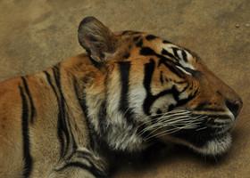 Пражский зоопарк