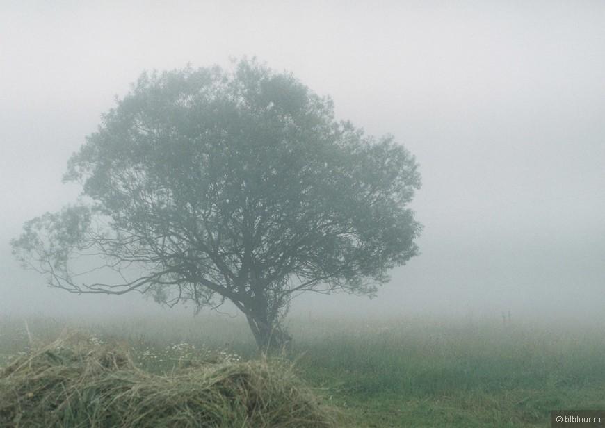 когда туман....сказка