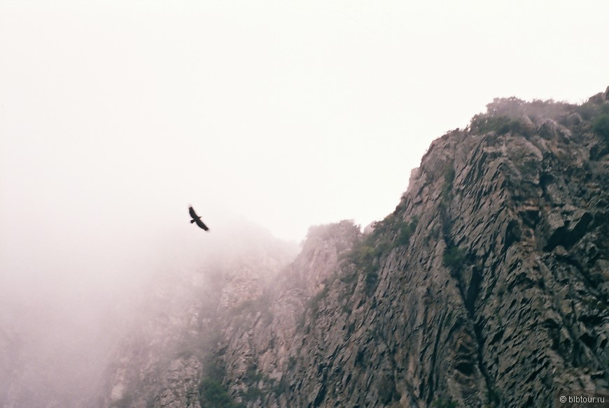 орел в Дарьяльском ущелье