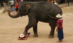 В Таиланде слон растоптал туристку во время экскурсии