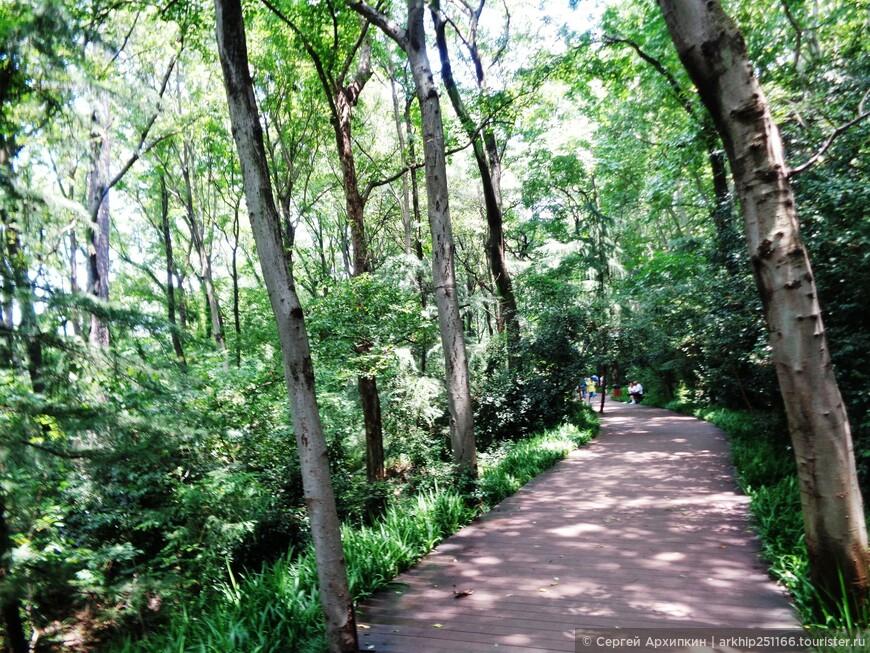 Парк постепенно превратился в лес