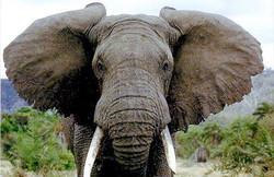 В нацпарке Зимбабве немецкий турист убил самого большого слона