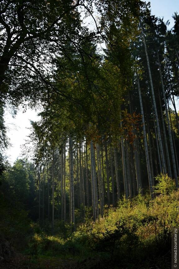 В лесу....