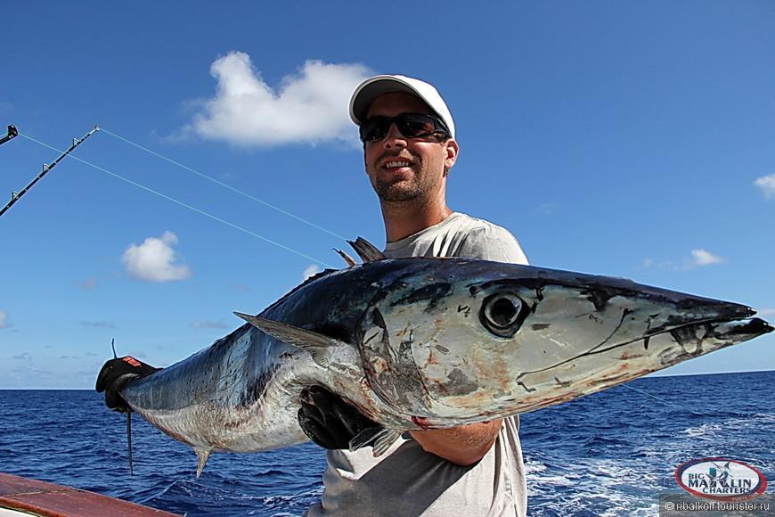 Ловля Ваху в Доминикане