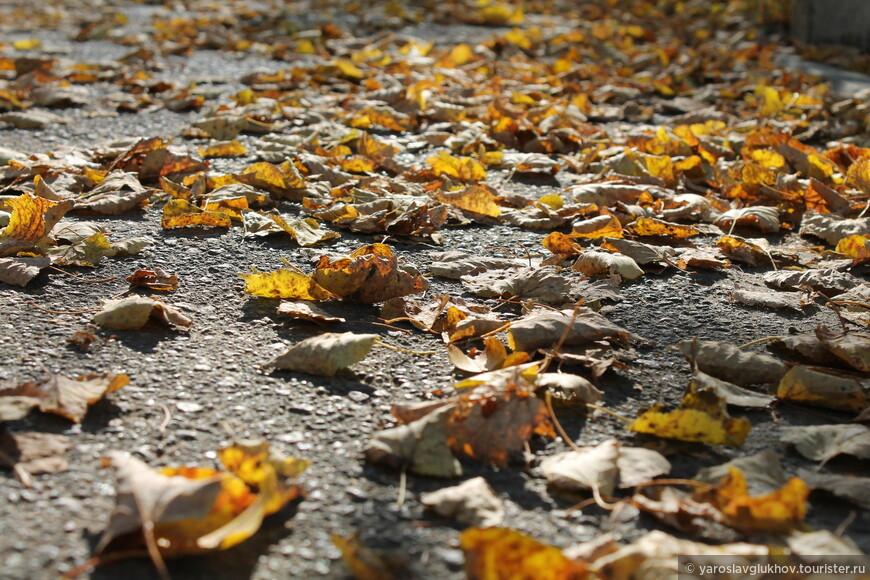 Жёлтые листья, словно золото, лежат на улицах.