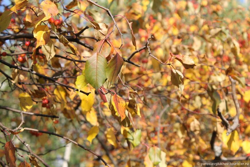 Золотые листья на ветках в парке.