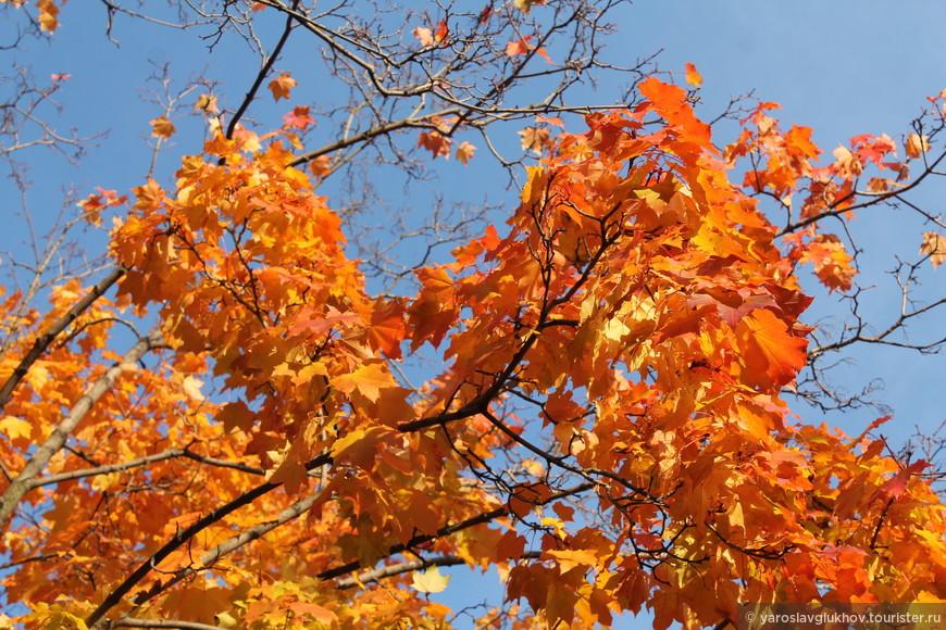 Пестрота окружающих деревьев: то жёлтые, то красные, то бардовые, то оранжевые...