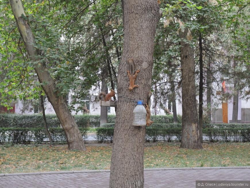 в утреннее время белок в дубовом парке несчётное количество