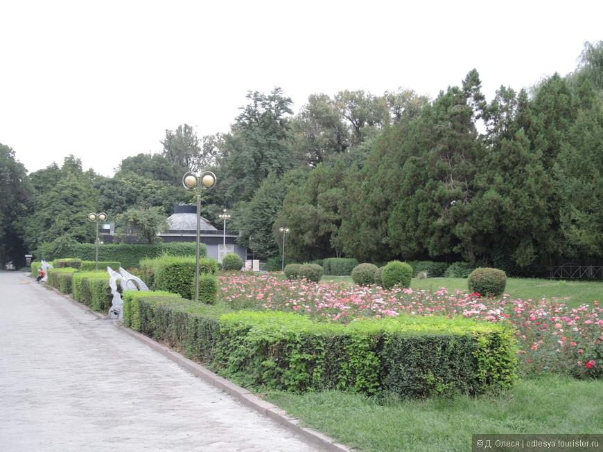 аллея перед дубовым парком