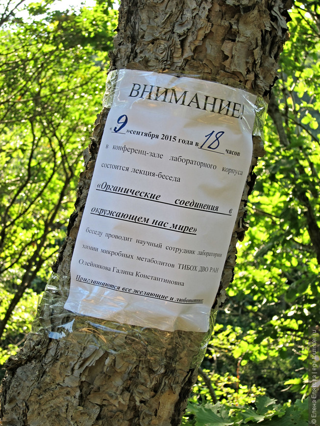 По дороге на пляж - объявление на дереве
