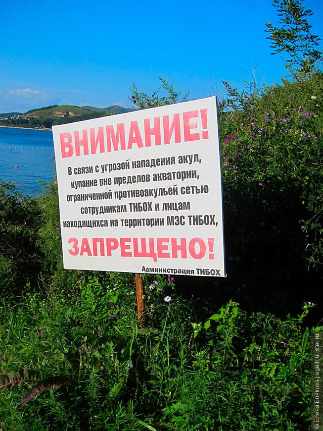 А потом сразу другое объявление. Несколько лет назад акула напала на женщину в бухте Теляковского, муж бросился ее спасать и остался без рук.