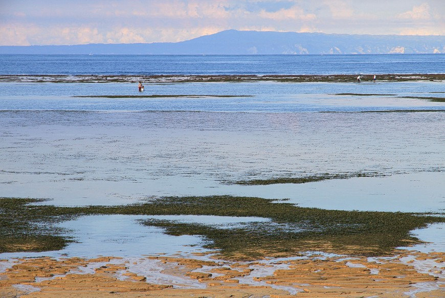 Балийцы сказали, что собирают они во время отлива морские огурцы, очень даже употребляемые ими в пищу. Но собирали не только огурцы. О чем промолчали - так и не выяснила!