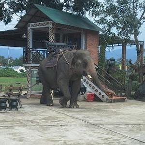 Слон-трудяга.jpg