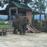 Слон идет.jpg