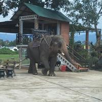 Драка в Дак Лаке-2