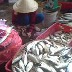 Продавей рыбой.jpg