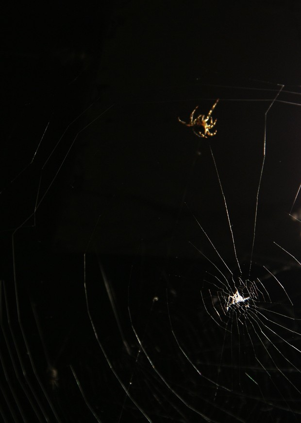 Паучек. Ему все равно где натянута паутина, в Брюгге или Козельске