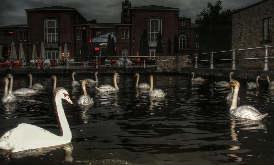 Лебеди на вечеринке.